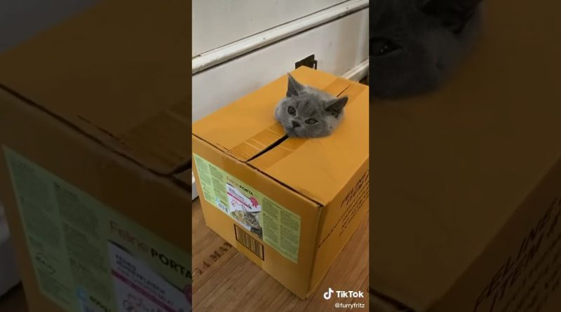 Only Kats Video: 猫 かわいい – Funny Cats and Kittens #stories  #Shorts Video 891