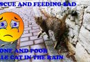 Only Kats Video: RESCUE AND FEEDING SAD ALONE AND POOR MALE CAT IN THE RAIN