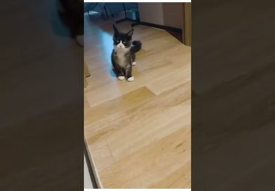 Only Kats Video: THE CONFUSING BEHAVIOR OF CAT 🐈 #shorts