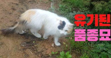 Only Kats Video: 유기된 품종묘(터키쉬앙고라) 구조했습니다. (ft.통덫포획)  Abandoned cat rescue